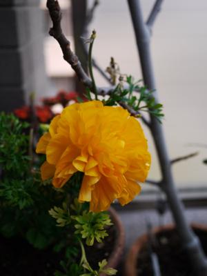 春爛漫まであと少し_e0359436_23553504.jpg