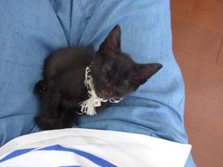 子猫が2か月育つと_e0359436_23581049.jpg