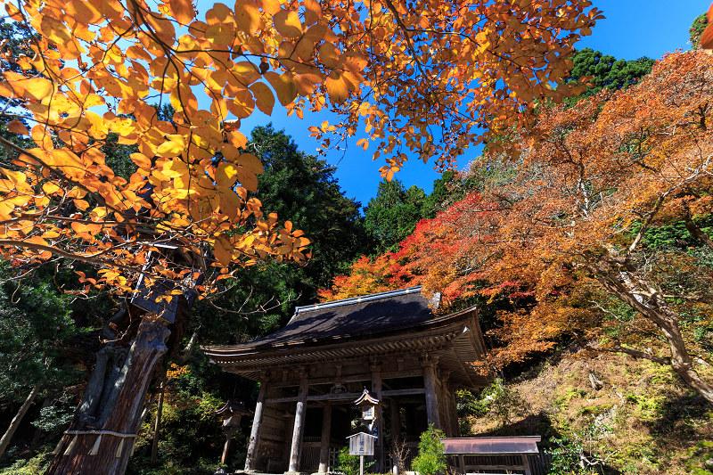 Opening!京都の紅葉2016 鮮やかな峰定寺_f0155048_2394273.jpg