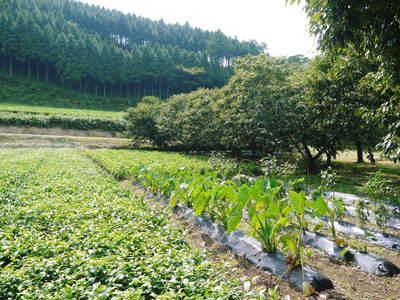 令和元年度の水源キウイ!予約受付スタート!完全無農薬・無化学肥料の国産キウイ!収穫始めました!_a0254656_19142089.jpg