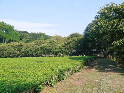 令和元年度の水源キウイ!予約受付スタート!完全無農薬・無化学肥料の国産キウイ!収穫始めました!_a0254656_19174822.jpg