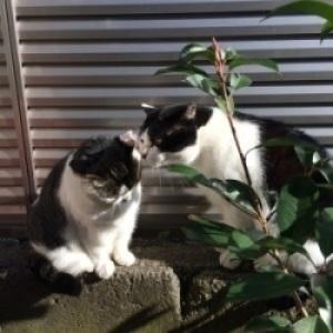 猫の心を安心させるためには_f0325471_20051278.jpg