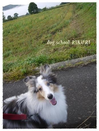 家族+下宿犬で旅行に行ってきました♪ その②_a0284100_12033759.jpg
