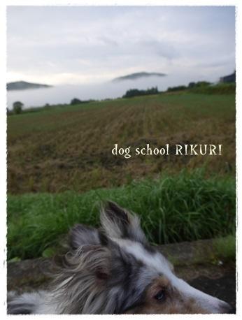家族+下宿犬で旅行に行ってきました♪ その②_a0284100_12034772.jpg