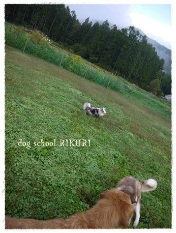 家族+下宿犬で旅行に行ってきました♪ その②_a0284100_12070341.jpg
