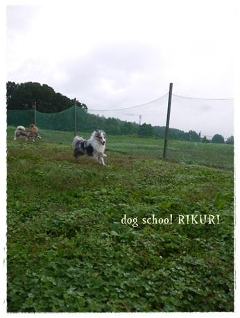 家族+下宿犬で旅行に行ってきました♪ その②_a0284100_12093693.jpg