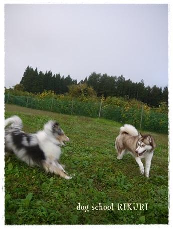 家族+下宿犬で旅行に行ってきました♪ その②_a0284100_12100150.jpg