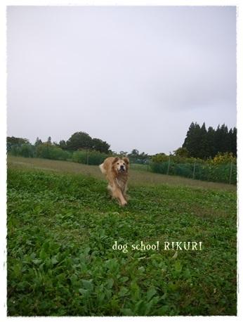 家族+下宿犬で旅行に行ってきました♪ その②_a0284100_12102566.jpg
