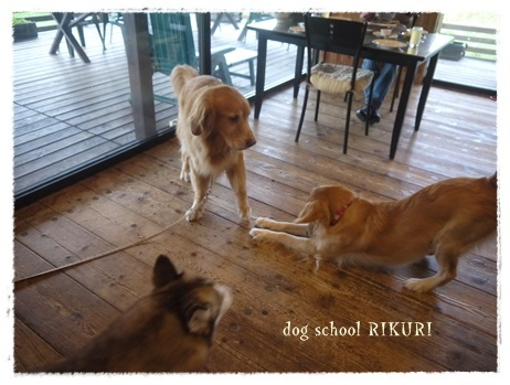 家族+下宿犬で旅行に行ってきました♪ その②_a0284100_12154852.jpg