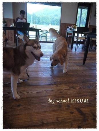 家族+下宿犬で旅行に行ってきました♪ その②_a0284100_12175902.jpg