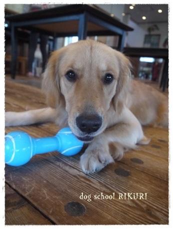 家族+下宿犬で旅行に行ってきました♪ その②_a0284100_12184610.jpg