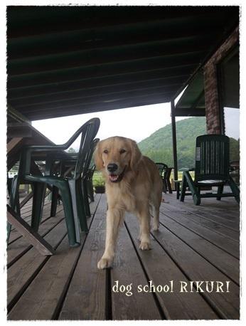 家族+下宿犬で旅行に行ってきました♪ その②_a0284100_12203087.jpg