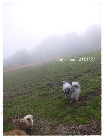 家族+下宿犬で旅行に行ってきました♪ その③_a0284100_19514076.jpg