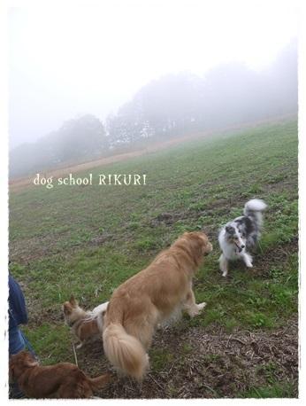 家族+下宿犬で旅行に行ってきました♪ その③_a0284100_19521247.jpg