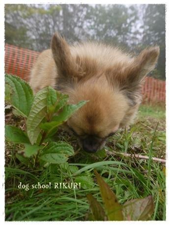家族+下宿犬で旅行に行ってきました♪ その③_a0284100_20050404.jpg