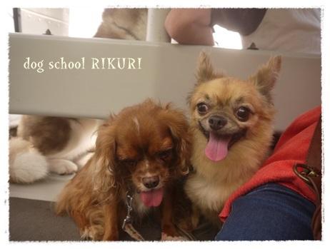 家族+下宿犬で旅行に行ってきました♪ その③_a0284100_20110480.jpg