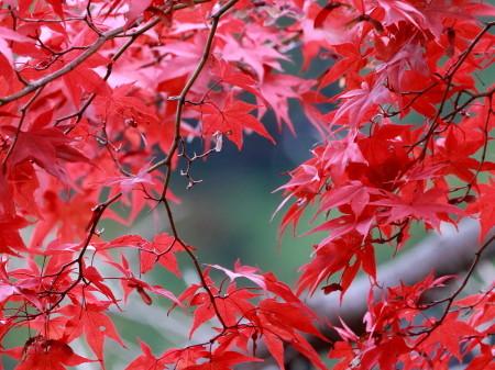カワセミ  YSI_d0346713_17110806.jpg