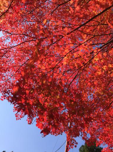 あまりに綺麗な紅葉_c0223630_00244045.jpg