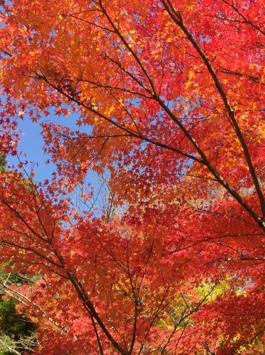 あまりに綺麗な紅葉_c0223630_00244146.jpg