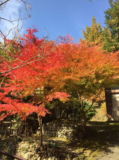 あまりに綺麗な紅葉_c0223630_00244268.jpg