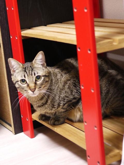 猫のお留守番 ココちゃん編。_a0143140_23372541.jpg
