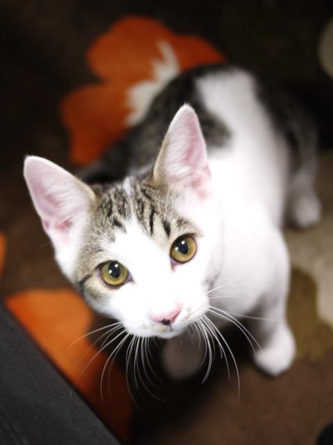 猫のお留守番 ナナくん編。_a0143140_23411359.jpg
