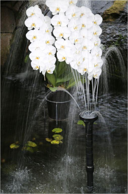 とっとり花回廊 ② 温室_a0256349_22445057.jpg