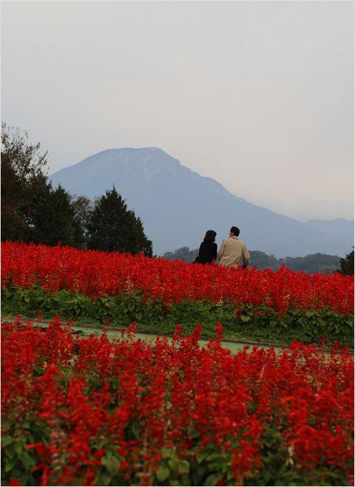 とっとり花回廊 ③ 花の丘_a0256349_2351922.jpg