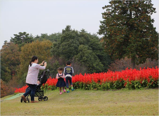 とっとり花回廊 ③ 花の丘_a0256349_236074.jpg