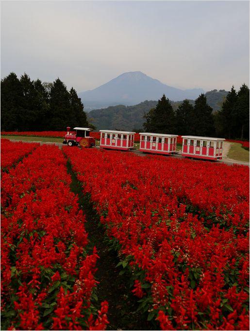 とっとり花回廊 ③ 花の丘_a0256349_2361835.jpg