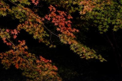 夕焼けの渚   紅葉祭_a0335867_06515619.jpg