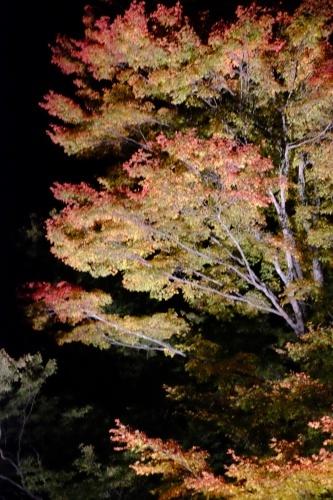夕焼けの渚   紅葉祭_a0335867_06533400.jpg
