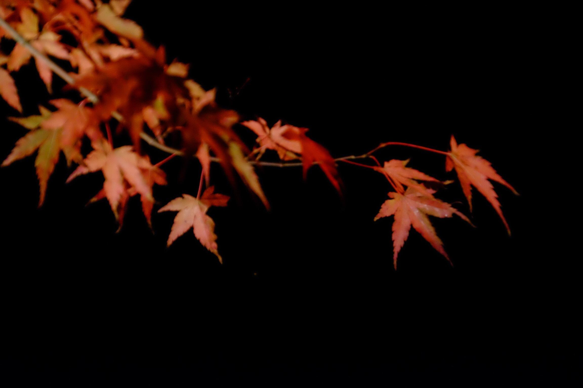 夕焼けの渚   紅葉祭_a0335867_06535162.jpg