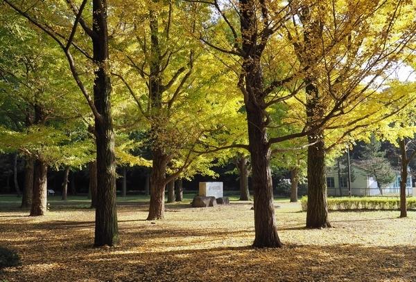 代々木公園の紅葉_a0248481_19532277.jpg