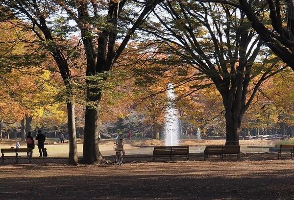 代々木公園の紅葉_a0248481_19535177.jpg