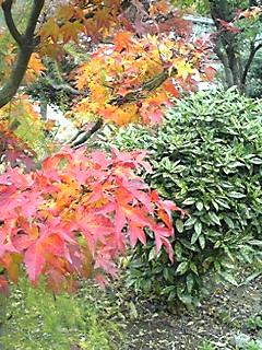 深まる秋に_f0253303_1091939.jpg