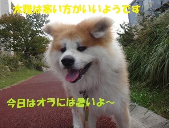 f0121712_01124793.jpg