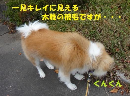 f0121712_01465069.jpg
