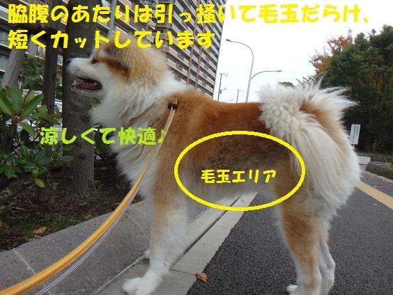f0121712_01465647.jpg