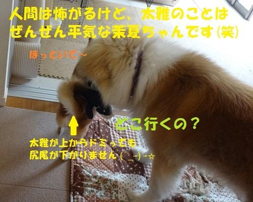 f0121712_15044770.jpg