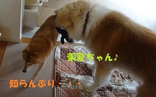 f0121712_15045115.jpg
