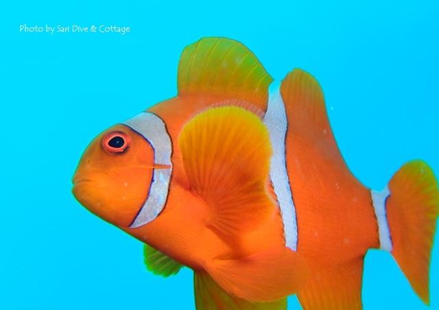 オレンジな子_c0211615_19113125.jpg