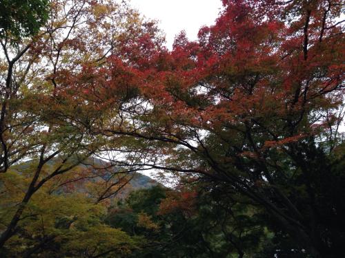 朝の散歩_d0220957_06491019.jpg
