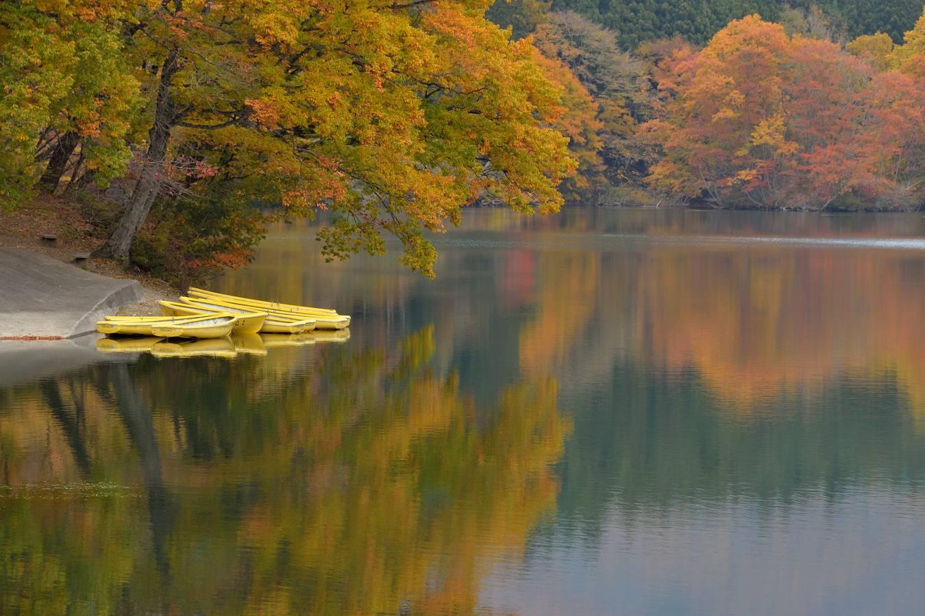 湖の紅葉 11/8日撮影_b0223668_8404367.jpg