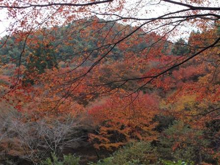 曲渕ダムパークの紅葉_b0214473_19415128.jpg