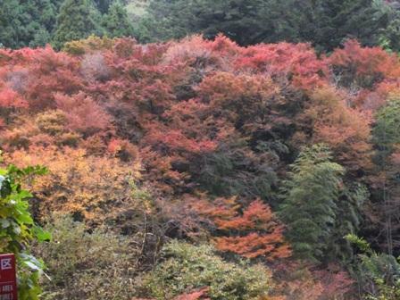 曲渕ダムパークの紅葉_b0214473_19421584.jpg