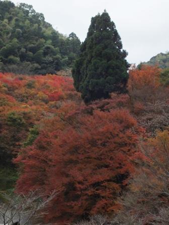 曲渕ダムパークの紅葉_b0214473_19423198.jpg