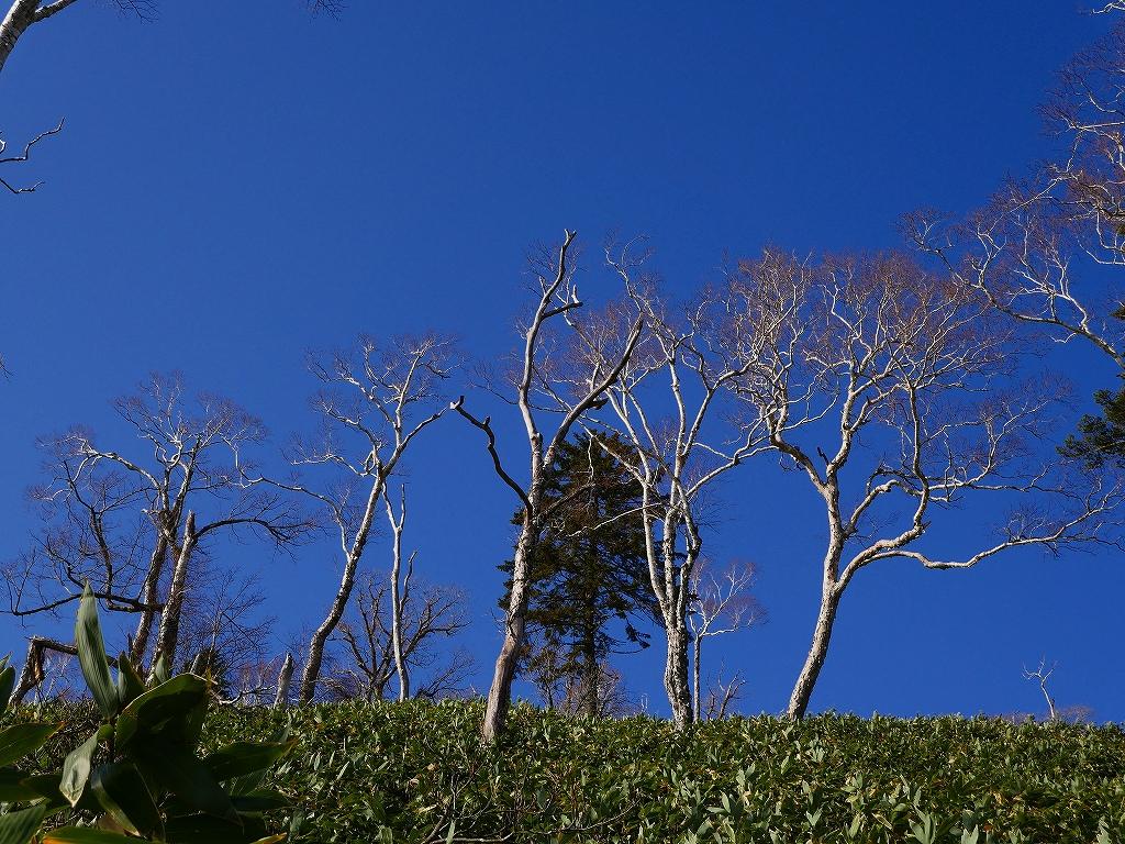 イチャンコッペ山、11月14日_f0138096_2232266.jpg