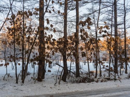 はじめて見る・・「霧氷」と「カラマツの紅葉」の共演!_f0276498_23565022.jpg