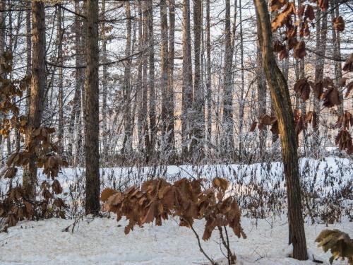 はじめて見る・・「霧氷」と「カラマツの紅葉」の共演!_f0276498_23581034.jpg